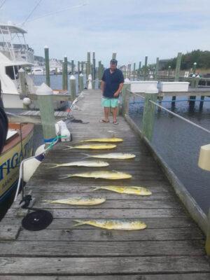 Mahi-Mahi Charter Fishing