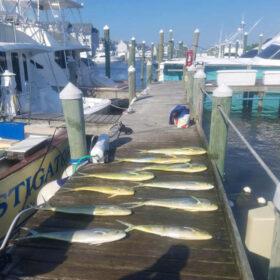 Charter Fishing for doirado
