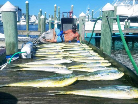 Sport Fishing For Mahi
