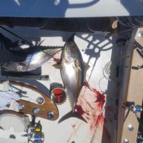 Ocean City tuna fishing charter